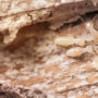 Check Your Home for These Signs of Termites