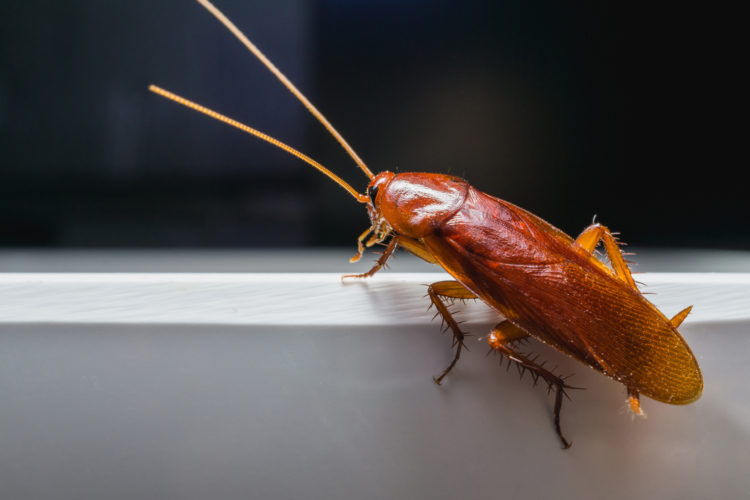 Should I Call an Exterminator About Roaches?