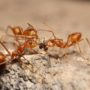 Here's What Ants Want from You and Your Home