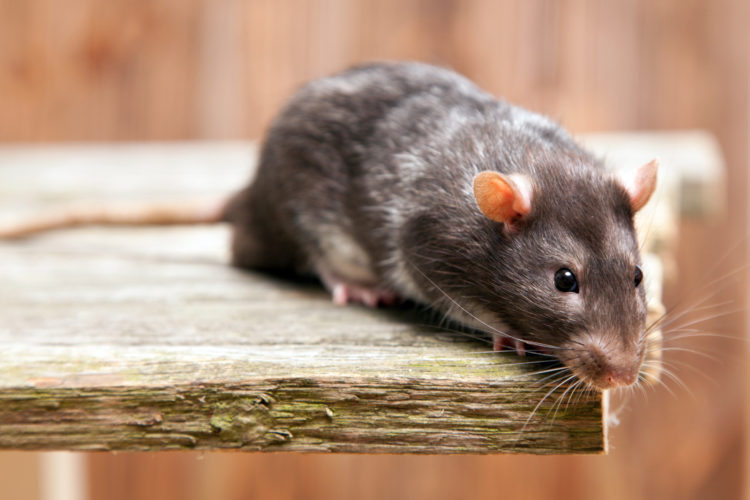 Pest Populations Can Multiply Quickly