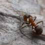 Take These Steps to Keep Ants Out