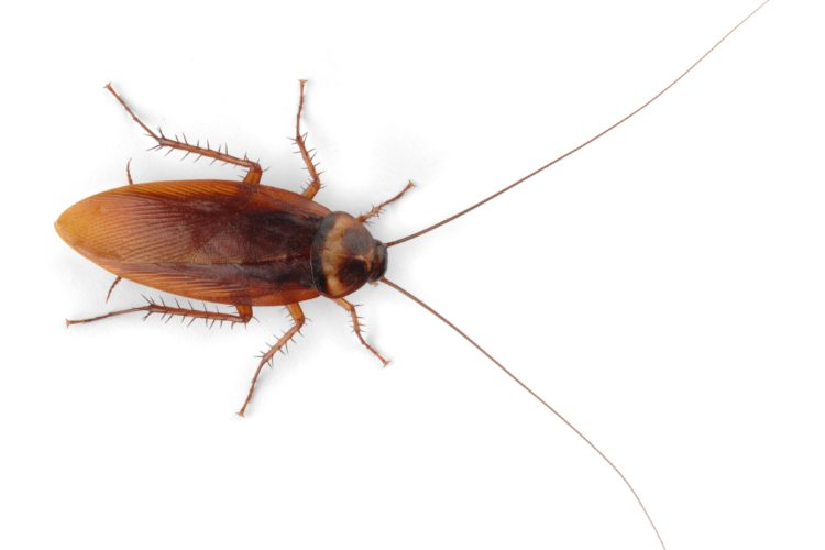 The Best Pest Control Methods for Roaches Are Preventive