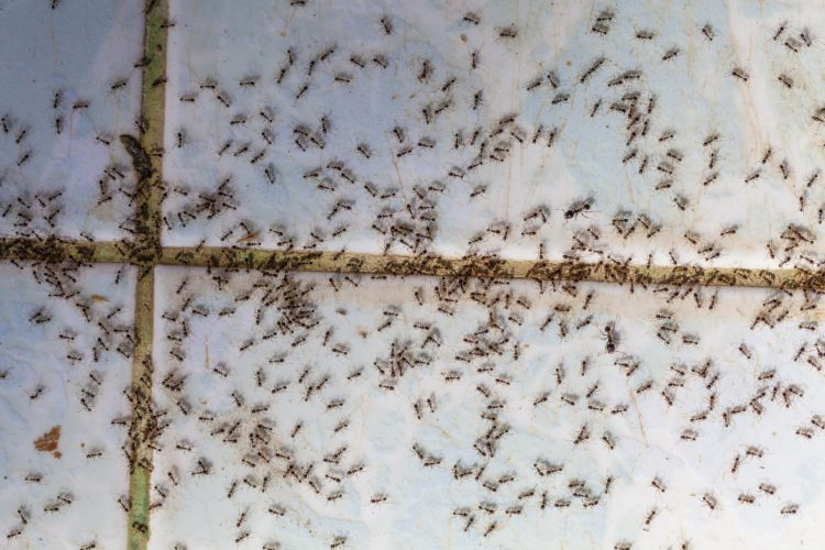 How Are Ants Behaving in Your Home?