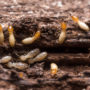 A Guide to Termite Prevention and Treatment