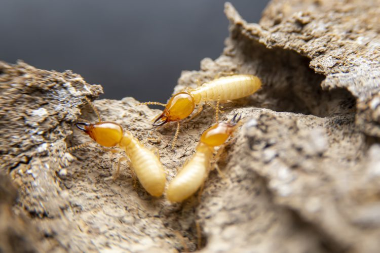 Is Your Home Inviting Termites?