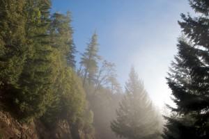 Highway 1 California trees in mist