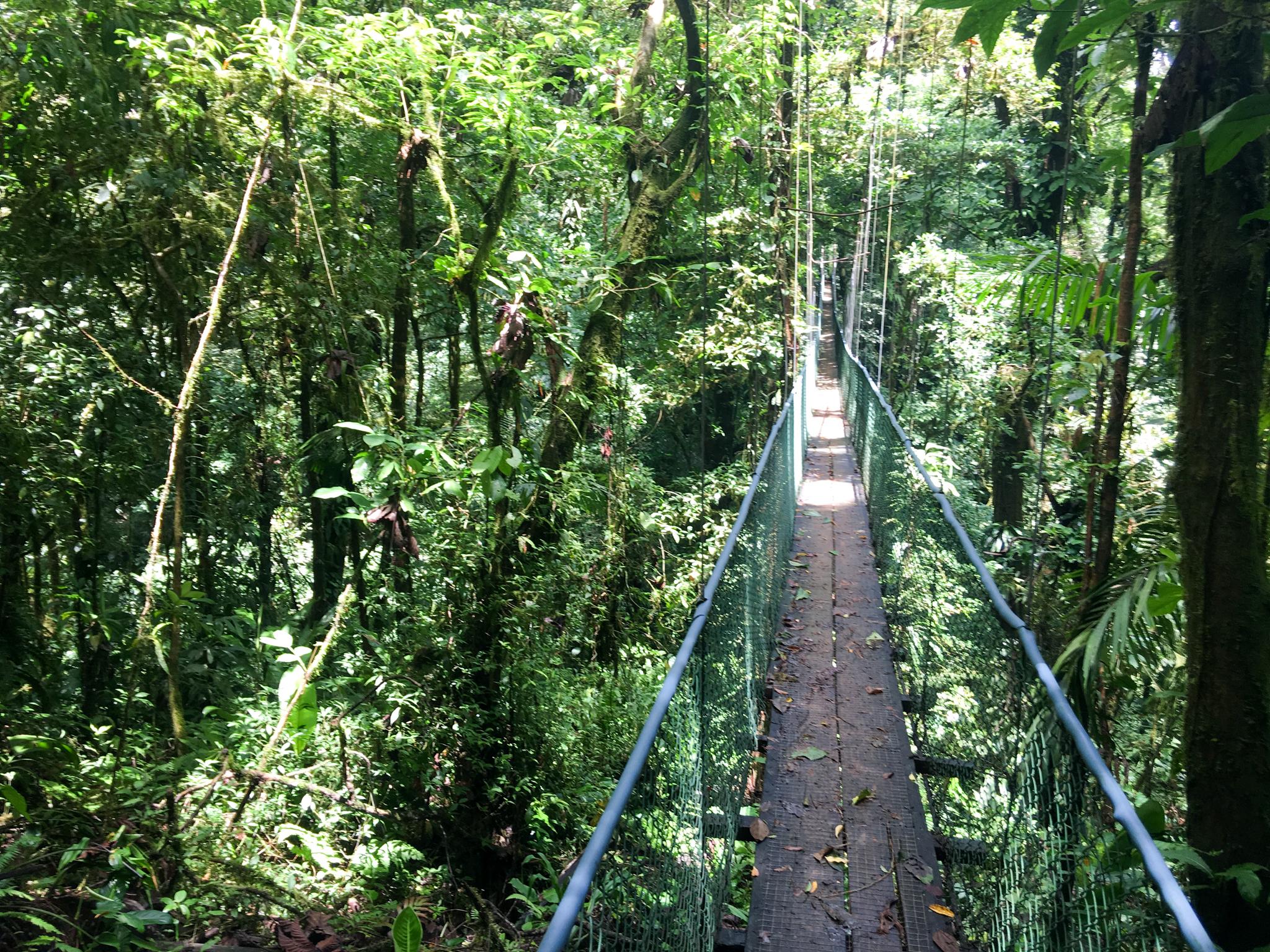These bridges were much higher, much longer, and much sketchier.