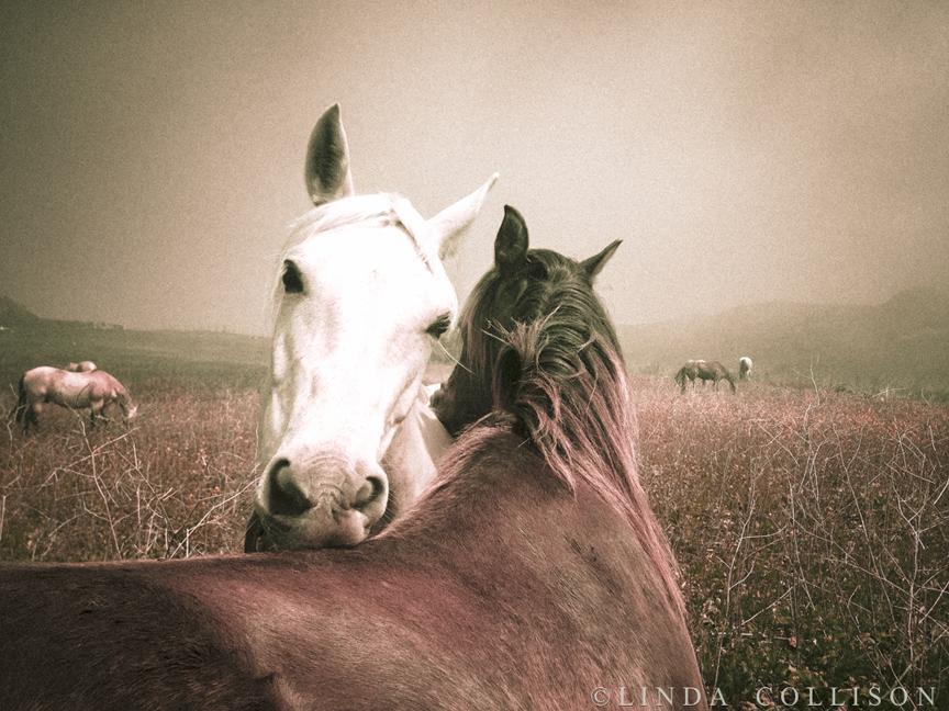 Horse Photographer, Santa Ynez