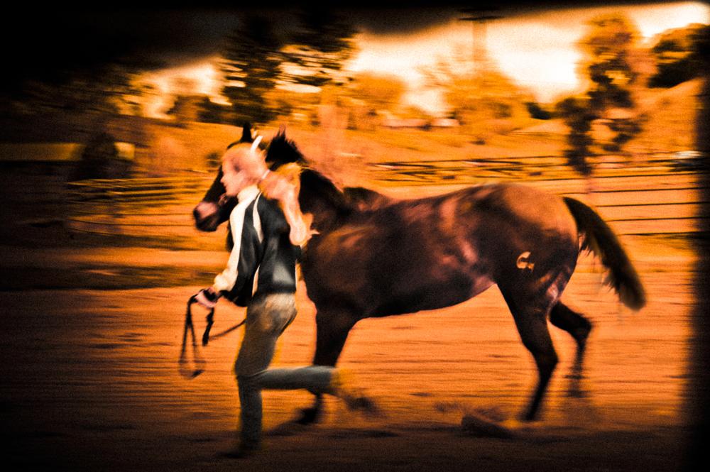 HorseTrot