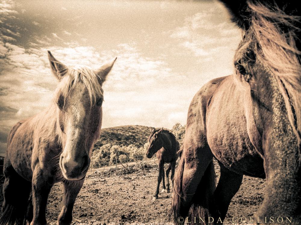 intuitive horses~