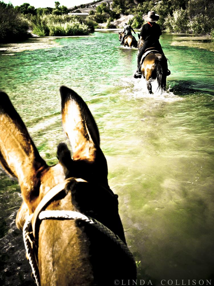 River Mule