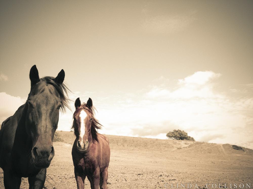 Wisdom Of Horses