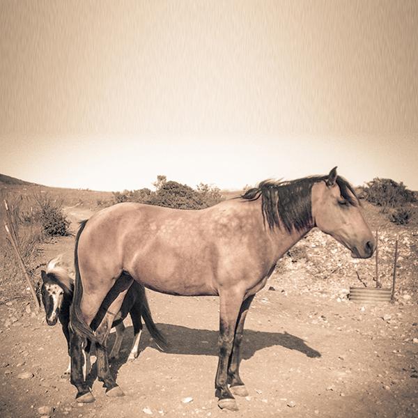 Horse Photographer in Santa Barbara