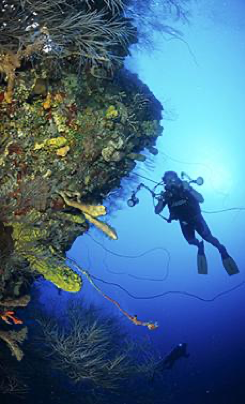 Diving the Wall, St. Croix