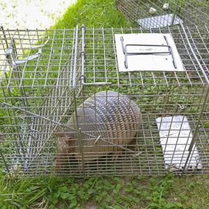 Animal Trapping Charleston SC