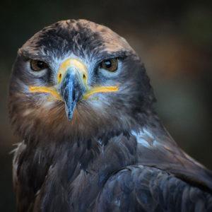 Bird Removal Charleston SC