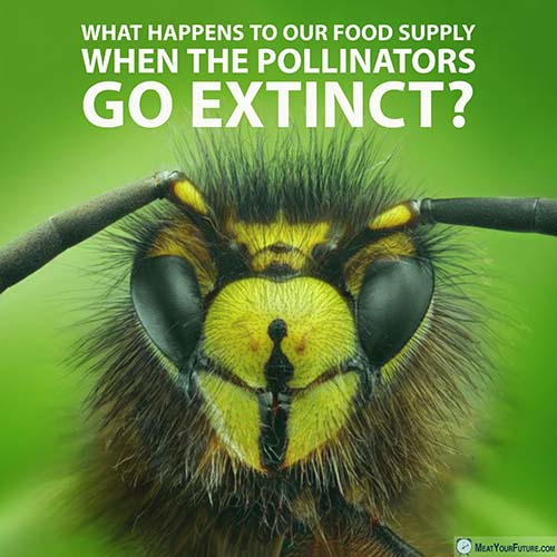 Bees and other pollinators are at risk   Meat Your Future