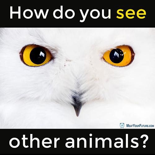 How Do You See Other Animals? | Meat Your Future