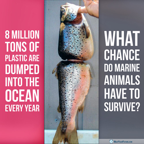 The Plastic Problem: What Chance Do Marine Animals Have To Survive? | Meat Your Future