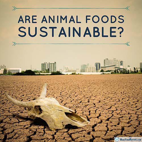 Are Animal Foods Sustainable? | Meat Your Future