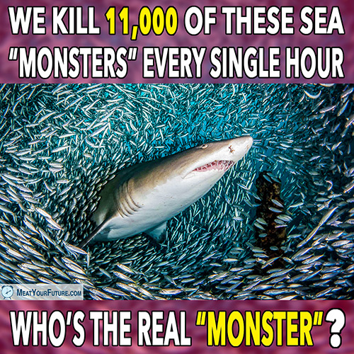 """We Kill 11,000 of These Sea """"Monsters"""" Every Hour - Who's the Real """"Monster""""? 