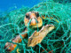 Do you enjoy eating endangered sea turtles with your shrimp? | Meat Your Future