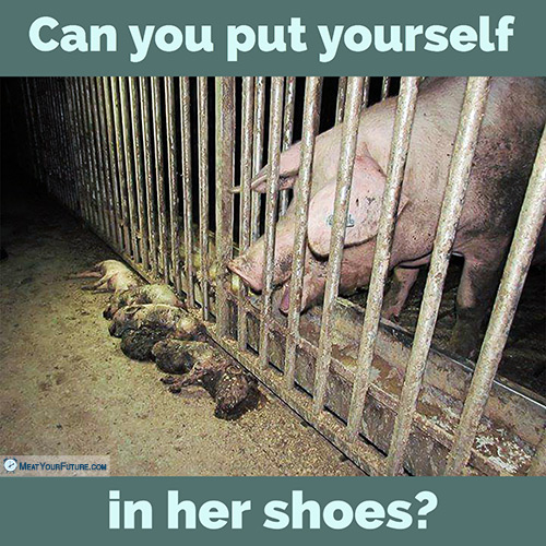 Can You Put Yourself in Her Shoes? | Meat Your Future