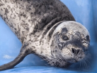 Pregnant Seal Shot in the Face so Humans can take her Food | Meat Your Future