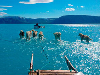 Greenland's Ice Sheet Is Rapidly Disappearing   Meat Your Future