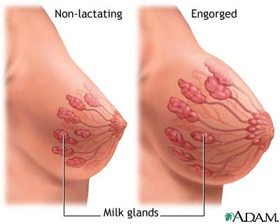 withstand lactating