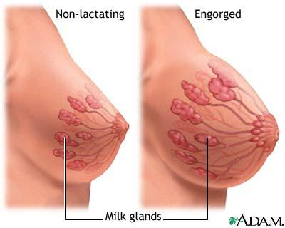 breast lactating