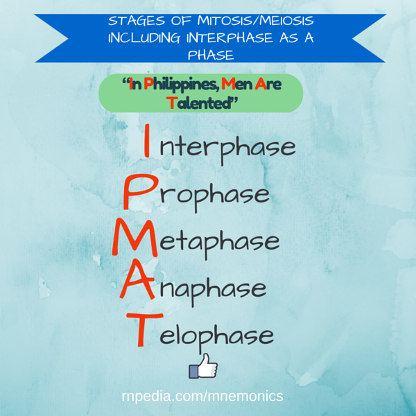 Stages of mitosis/meiosis including interphase as a phase
