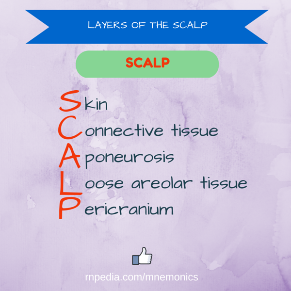 Layers of the scalp