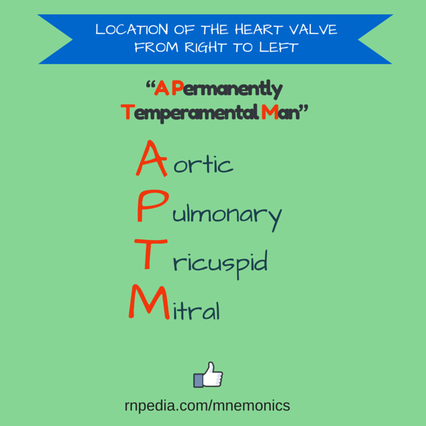 Location of the heart valve from right to left