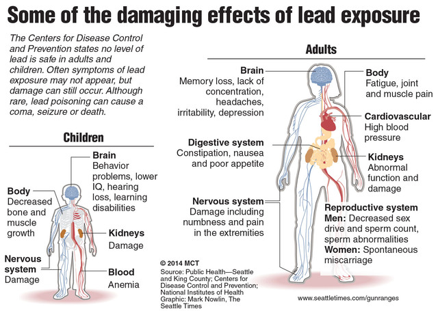 Diagram of the effects of lead exposure. Seattle Times 2014 With GUNRANGES-LEAD-3