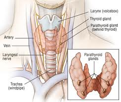 surgery-detailed-pic-of-neck