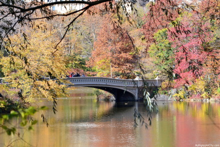 CentralPark-Foliage-Fall-2014-bow-bridge