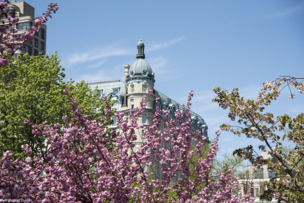 Central-Park-NYC-visit-cherrytrees-travelblog-mybigapplecity