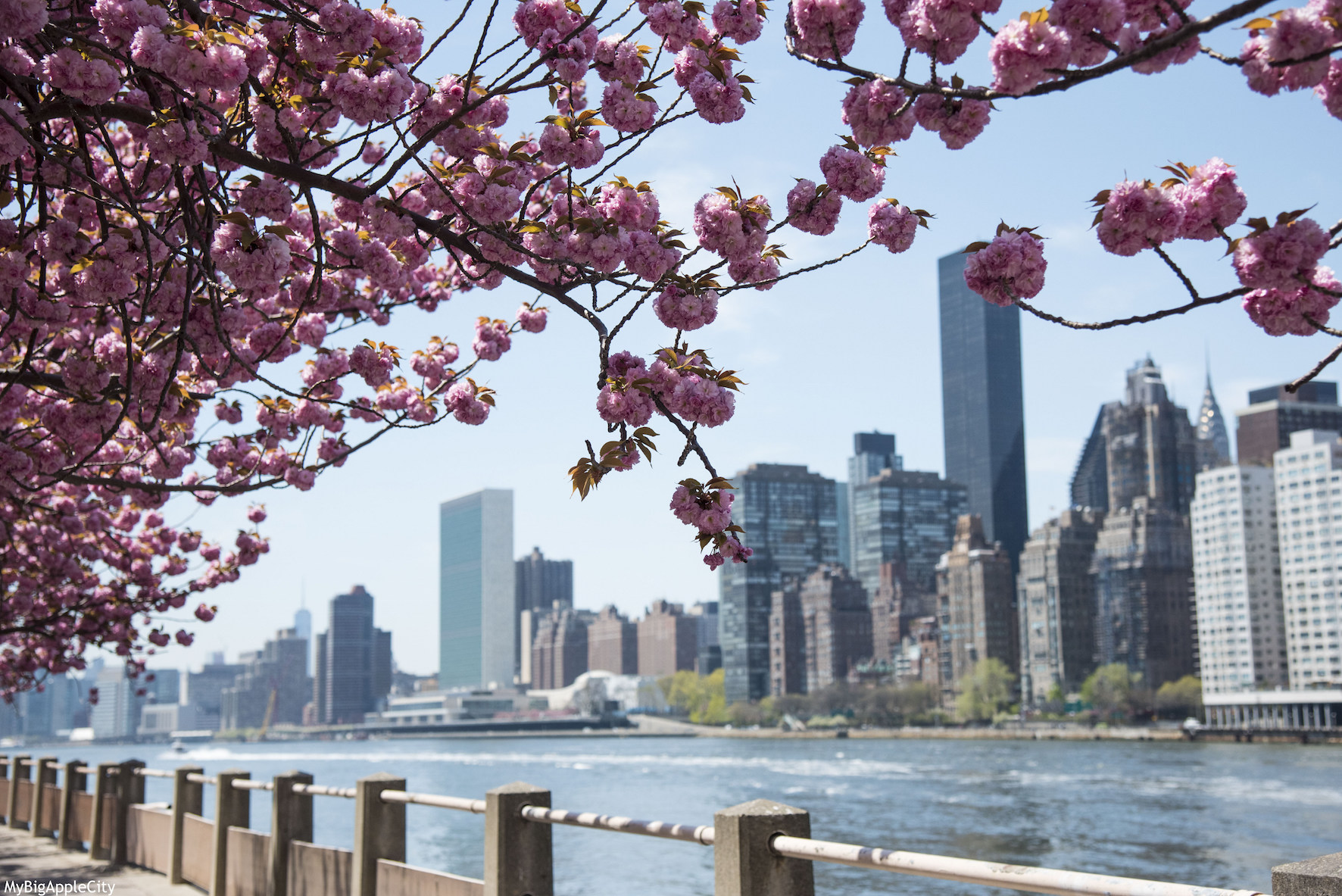 New-York-Skyline-Cherry-Tree-Visit-USA-MyBigAppleCity