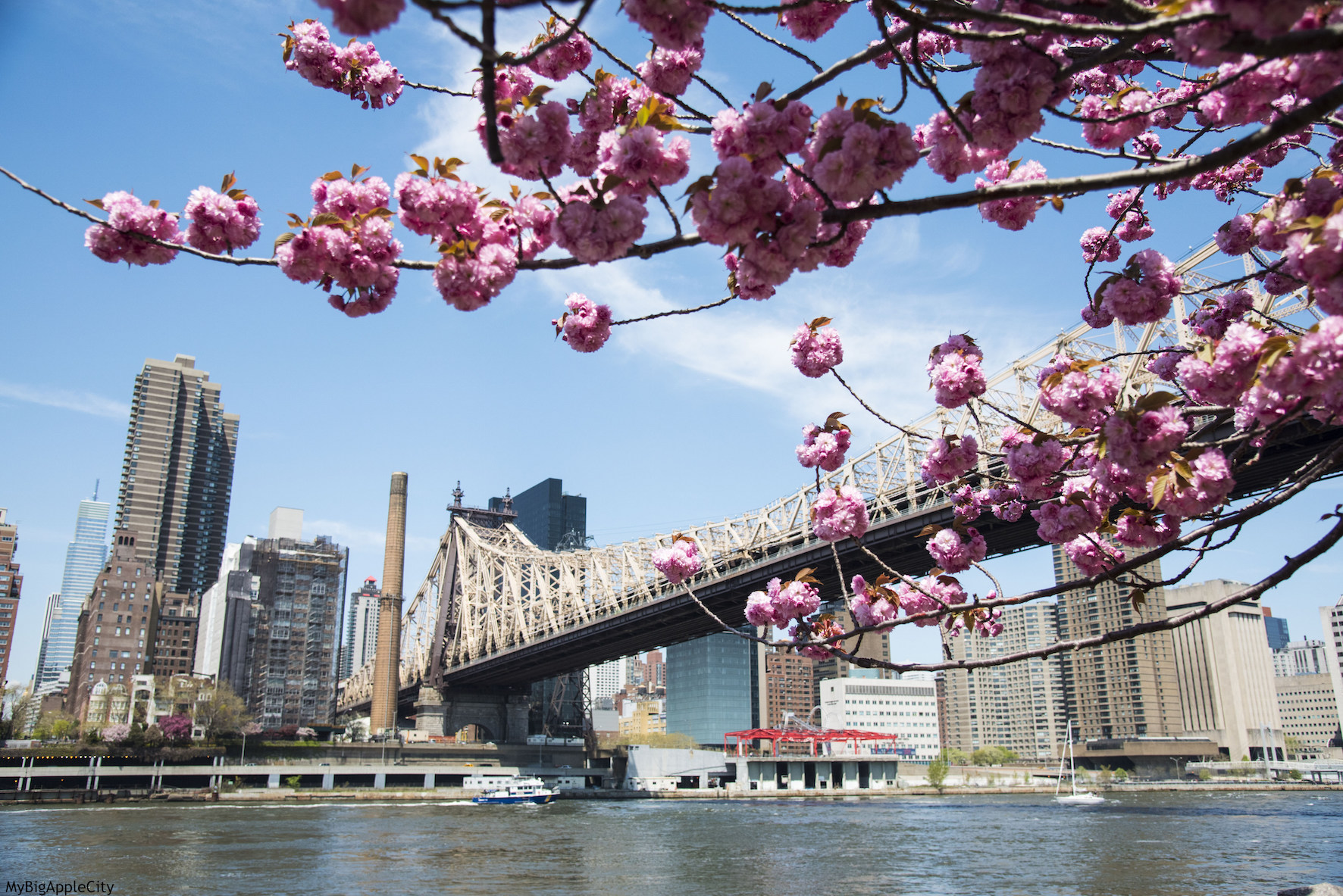 https://secureservercdn.net/166.62.109.86/e50.ce4.myftpupload.com/wp-content/uploads/2015/05/Spring-Cherry-blossom-tree-pink-New-York-Travel.jpg