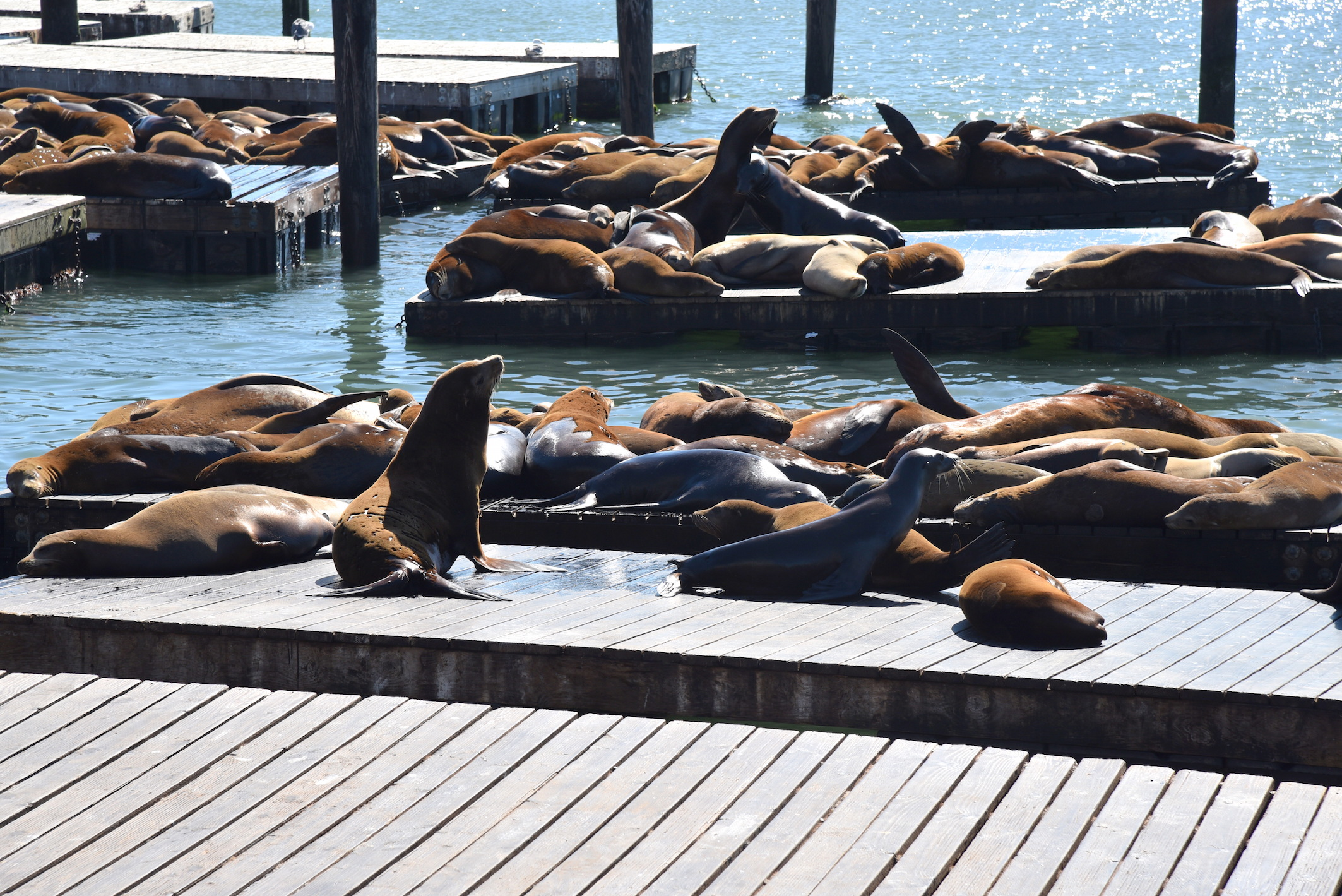 Visiting Fisherman's Wharf in San Francisco - Travel blog