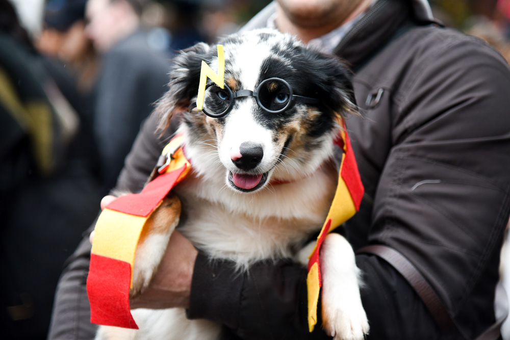 tompkins-park-dog-parade-2016-halloween-1