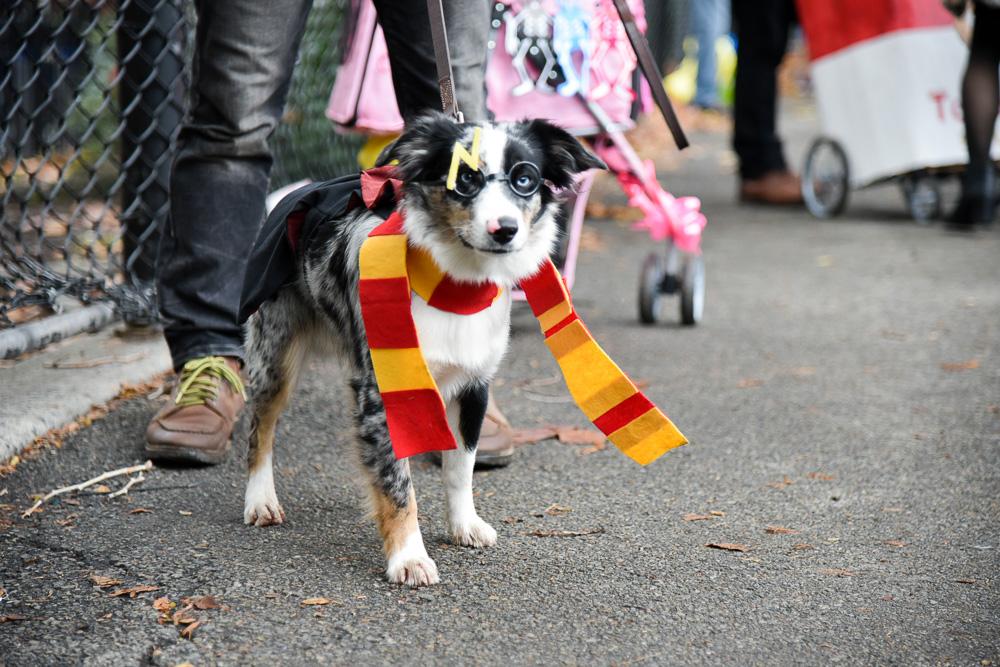 tompkins-park-dog-parade-2016-halloween-15