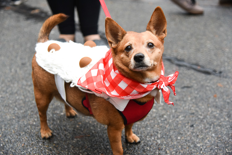 tompkins-park-dog-parade-2016-holloween-1