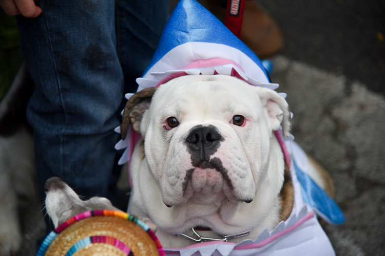 tompkins-park-dog-parade-2016-holloween-10