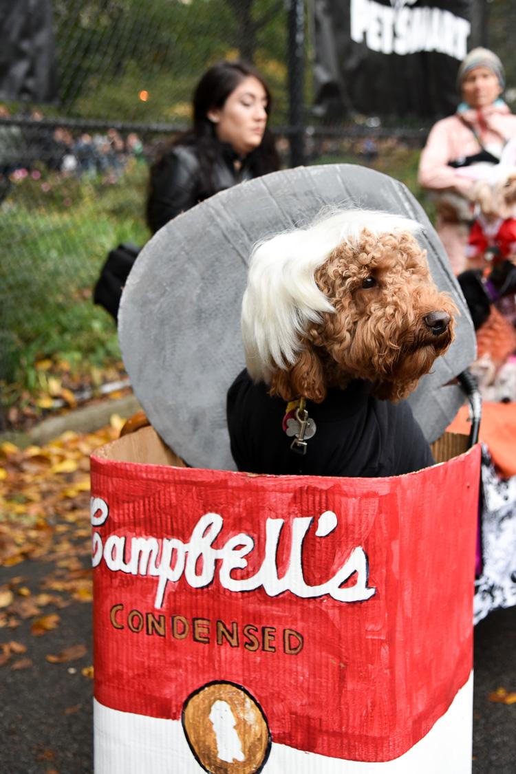 tompkins-park-dog-parade-2016-holloween-12