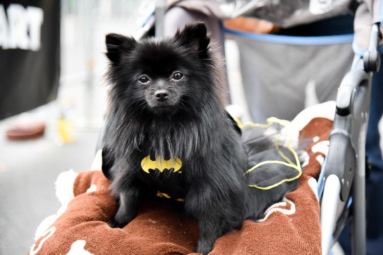 tompkins-park-dog-parade-2016-holloween-13
