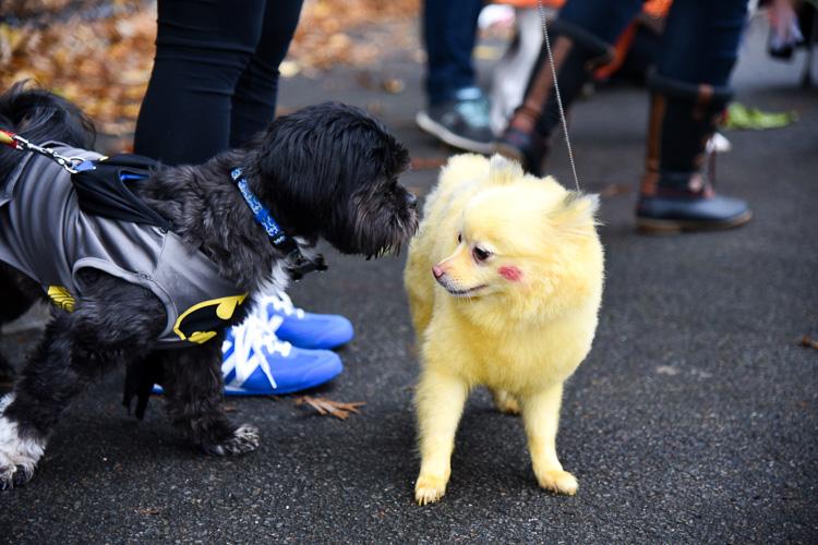 tompkins-park-dog-parade-2016-holloween-14