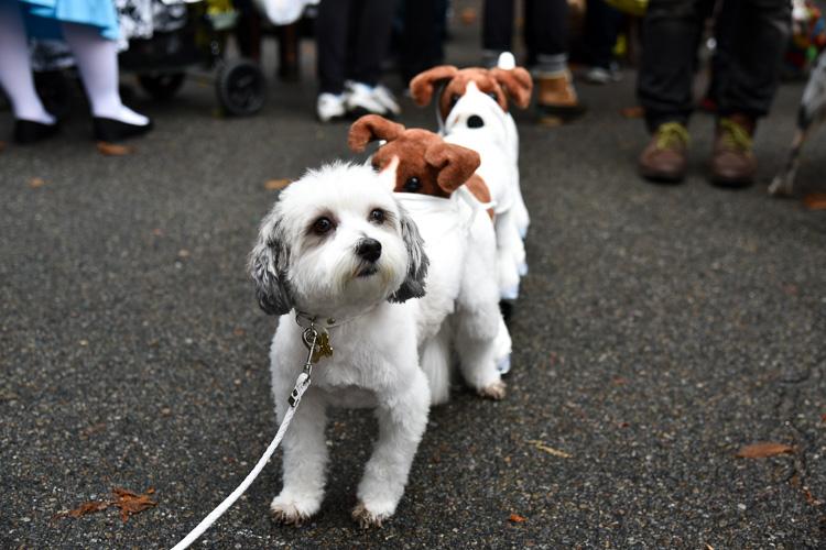 tompkins-park-dog-parade-2016-holloween-17