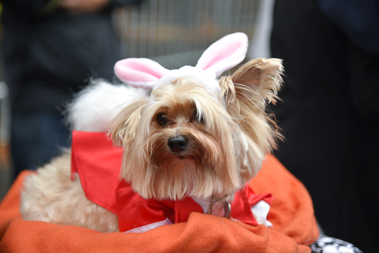 tompkins-park-dog-parade-2016-holloween-18